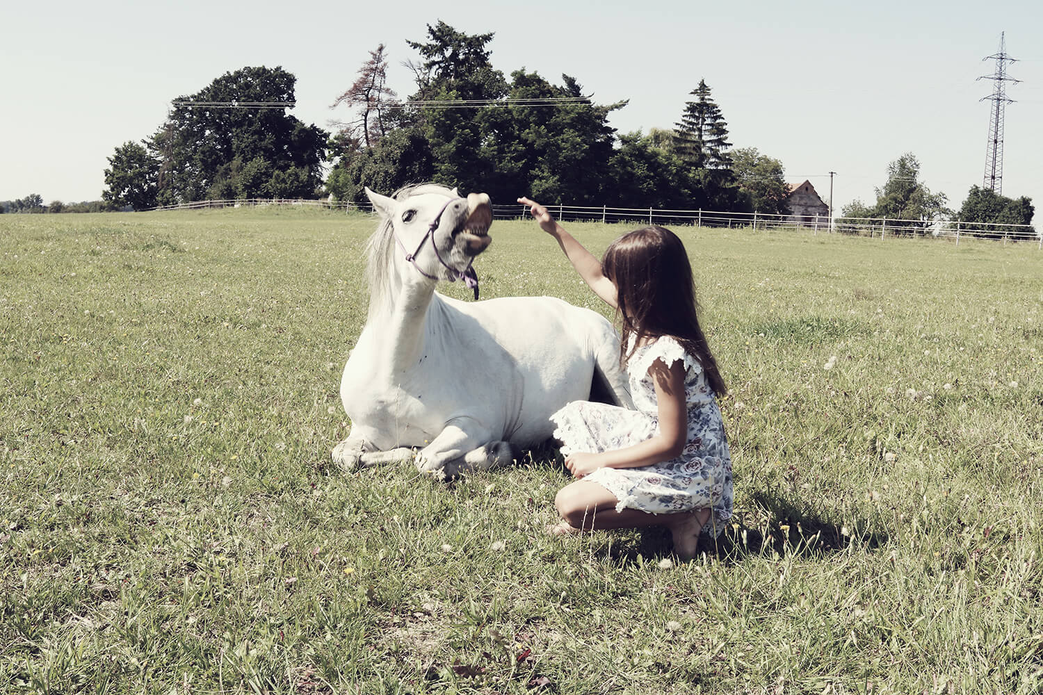 family photo of a little girl with a horse in nature